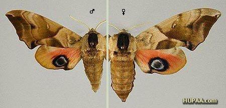 الهام از بالهای پروانه برای ساخت سطوح دافع آب