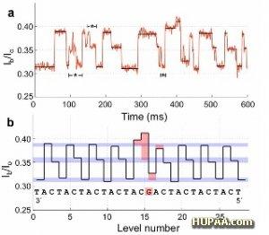 توالی سنجی سریع و ارزان DNA با نانوحفره جدید